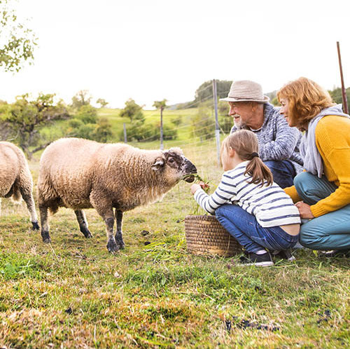 Family feeding sheep in countryside